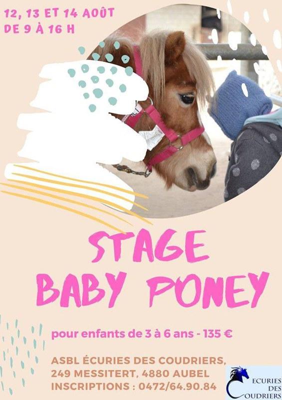 Stage baby poney du 12 au 14 août